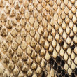Texture of genuine snakeskin — Stock Photo #38194103