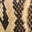 Texture of genuine snakeskin — Stock Photo #38194115