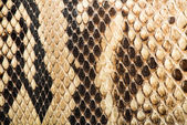 Texture of genuine snakeskin — Stock Photo