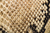 Texture of genuine snakeskin — Photo