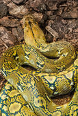 Snake creeps on the earth — Stock Photo