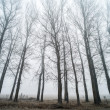 Stock Photo: Trees in fog