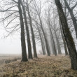 Big Trees in fog — Stock Photo #39821311