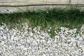 Green grass and stones — Stock Photo