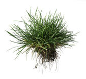Turf grass and earth — Stock Photo