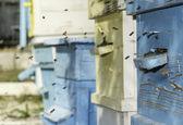 Zwerm bijen vlieg naar Bijenkorf — Stockfoto