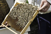 Beekeeper look honeycombs — Stock Photo