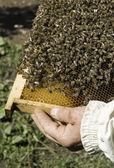 Close up honeycombs — Foto de Stock
