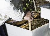 Beekeeper look honeycombs — Stock fotografie
