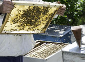 Beekeeper look honeycombs — Stock Photo