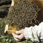 Close up honeycombs — Stock Photo #46763535