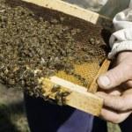 Close up honeycombs — Stock Photo #46763537