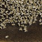 Close up honeycombs — Stock Photo #46763579