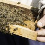 Close up honeycombs — Stock Photo #48406279