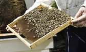 Biodlare se honungskakor — Stockfoto