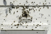 Bees entering the hive — Stock Photo