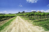 Vineyards and farm road in Italy — Stock Photo