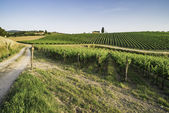 Vineyards in Tuscany — Stock Photo