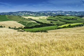 Cereal crops and farm in Tuscany — Stockfoto