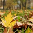 Yellow autumn leaf 2 — Stock Photo