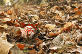 Leaves and mushroom — Stock fotografie