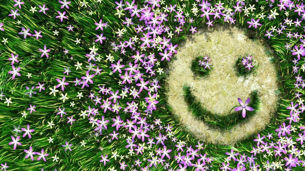 Haarige Blume? - Pflanzenbestimmung &