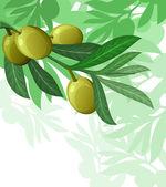 橄榄树背景 — 图库矢量图片