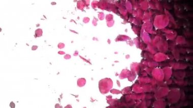 Animated celebrate rose petals transition — Stock Video