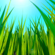Close up of fresh thick grass with sun and ground — Stock Photo #45639767