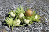 Hazelnut unripe — Stock Photo