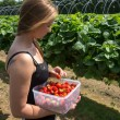 Young wompicking strawberries — Stock Photo #29005573