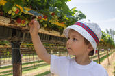 Fragole di pennata little boy — Foto Stock