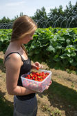 Young woman picking strawberries — Stock Photo