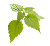 Nettle — Stock Photo