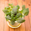 Growing mustard greens salad — Stock Photo