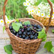 Bblack currant — Stockfoto