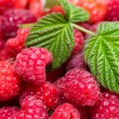 Raspberry with leaves — Stock Photo #28961177
