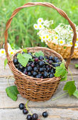 Bblack currant — Stock Photo