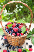 Basket of various berries — Stock Photo