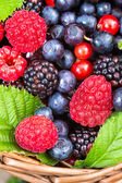 Berries mix closeup — Stock Photo