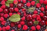 Wild berries background — Stock fotografie