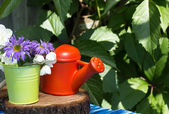Garden flowers and small watering can  — Stock Photo