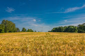 Summer sunset at golden field landscape, gorgeous nature, German — Stock Photo