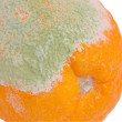Mildew on an orange — Stock Photo
