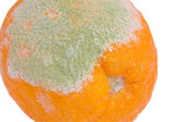 Mildew on an orange — Stock Photo