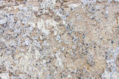 Wall texture with concrete and stones — Stock Photo