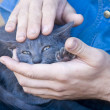 Caressing a kitten — Stockfoto