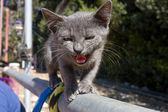 Scared kitten meowing — Stock Photo