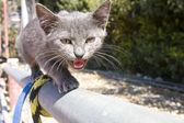 栅栏上的勇敢小猫 — 图库照片