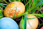 Eggs in the grass — Stock Photo
